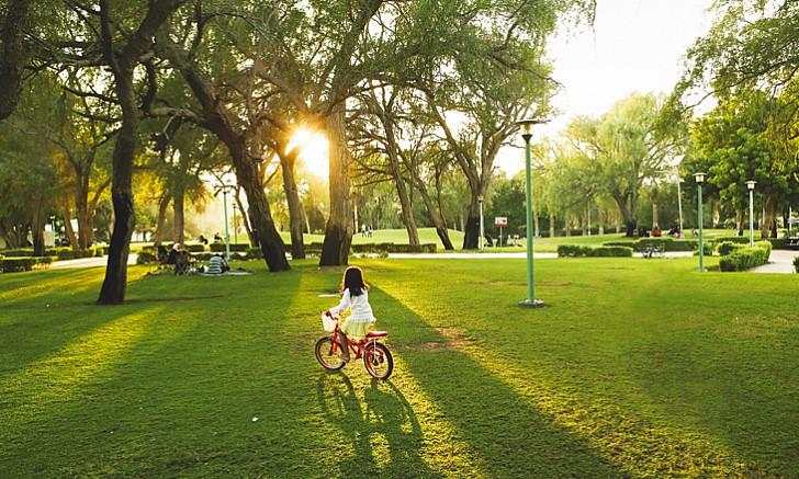park-mushrif-park