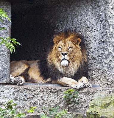 Dubai-Zoo