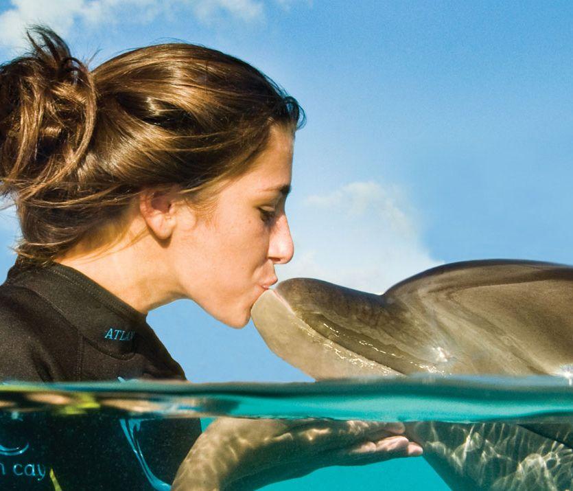 delfin-kiemelt